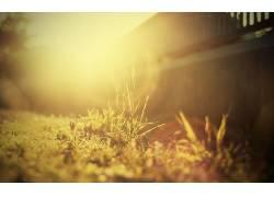 壁纸,植物,摄影,景深,太阳315392图片