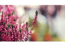 壁纸,背景虚化,花卉,粉色的花朵,景深,宏136980