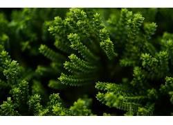 壁纸,植物,景深111510图片