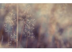 壁纸,植物,景深48675图片