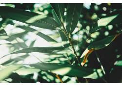 壁纸,植物,树叶,阳光361509图片