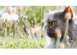 猫,性质,动物,宏,景深,植物,草259935图片