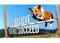 柯基犬,彭布罗克威尔士科尔吉斯,狗,跳跃,动机,动物,活版印刷7260图片
