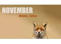 狐狸,动物,十一月55813
