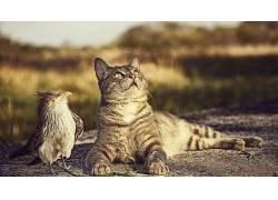 动物、猫、鸟类、自然、和谐、抬头