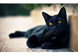 猫,黑猫,动物,淡褐色的眼睛184570图片