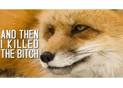 狐狸,黑暗的幽默,活版印刷,动物55781图片