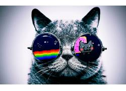 喵喵猫,猫,眼镜,数字艺术,动物45604图片