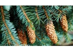 树木,壁纸,绿色,植物,木,科541261