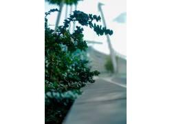 树木,摄影,景深,植物648432图片