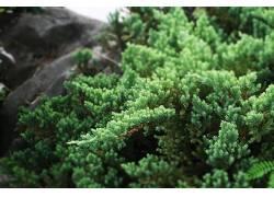 树木,景深,植物66909图片