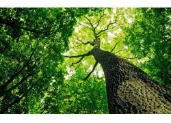 树木,晴朗,新鲜,蠕虫的眼睛视图,壁纸,植物,绿色116993图片