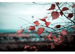 树木,树叶,秋季,壁纸,植物,科299481