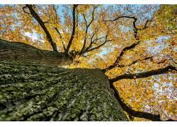 树木,树叶,秋季,植物,蠕虫的眼睛视图592212