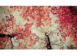 树木,植物,秋季,壁纸207277