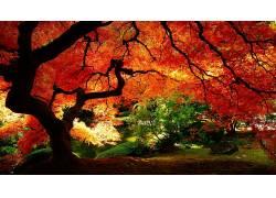 树木,秋季,植物162628