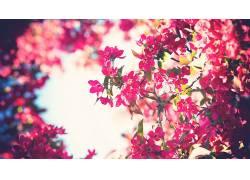 树木,花卉,天空,过滤,粉色的花朵,背景虚化238365