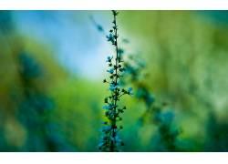 模糊,壁纸,植物,花卉,蓝色的花朵43712