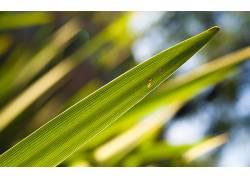 芦苇,草,植物,绿色,背景虚化,景深186448图片