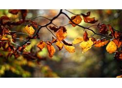 树枝,树叶,景深,壁纸,植物,秋季116011