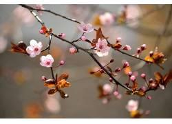 树枝,科,花卉,景深,开花337045
