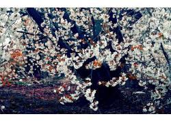 樱花,树木,花卉,壁纸16454