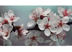 樱花,细节,花卉630592
