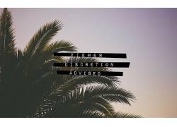棕榈树,写作,活版印刷,植物505162图片