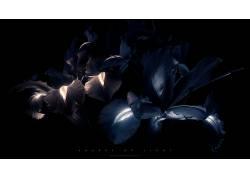 氖,花卉,黑色,数字艺术34637
