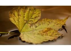 棕色,黄色,树叶,宏,植物567593
