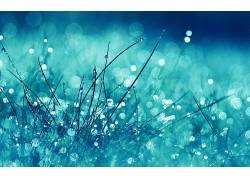 水,宏,蓝色,水滴,壁纸,植物13960
