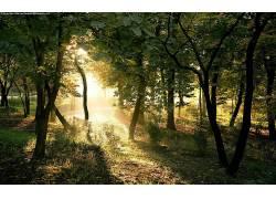 森林,树木,壁纸,阳光,植物55306图片