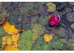 水,树叶,花卉,植物645382