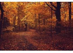 森林,树木,秋季,植物,路径289555