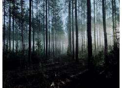 森林,植物,太阳光线442722