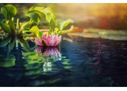 水,睡莲,植物,花卉560946