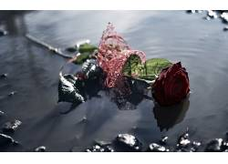 水,花卉,玫瑰472646