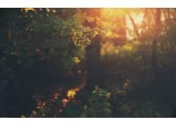 森林,草,壁纸,树叶,植物,树木,阳光65311图片