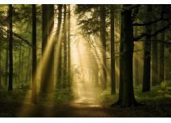 森林,黑暗,阳光,路径,树木,植物408786