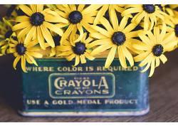 植物,盒子,黄色的花朵,花卉543432
