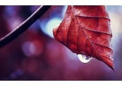 水滴,树叶,景深,植物,科,秋季409175图片