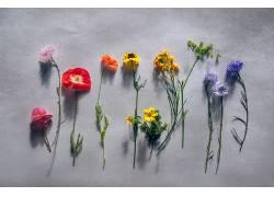 植物,华美,花卉538369