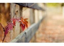 植物,篱笆,树叶,景深310919