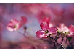 植物,粉色的花朵,花卉,景深,壁纸338016