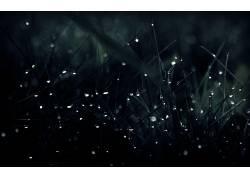 水滴,草,湿,黑暗,壁纸,植物106165图片