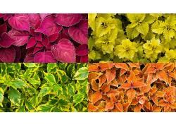 植物,壁纸,在户外435222图片