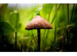 蘑菇,宏,阳光,模糊,草,植物364240图片