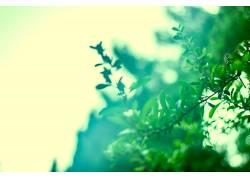植物,绿色,树叶,科227970