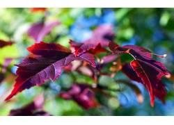 植物,壁纸,树叶,景深245660
