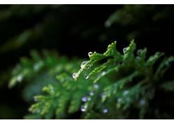 植物,绿色,露,背景虚化567071